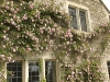Barton Place is covered with climbing roses